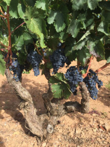red_grapes_wine